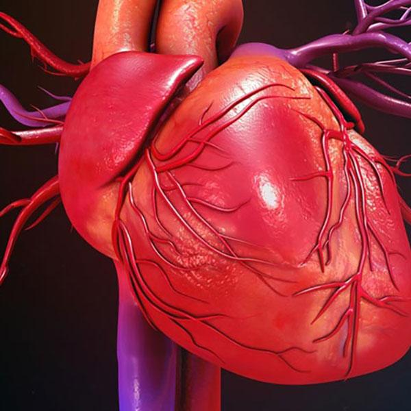 عملکرد قلب